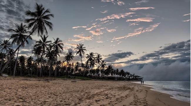 spiaggia palme